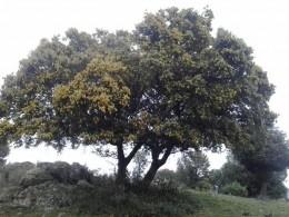sierra de guadarrama3