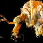 """Así es el mosquito """"Aedes aegypti"""", causante del zika, el dengue y la chikungunya"""