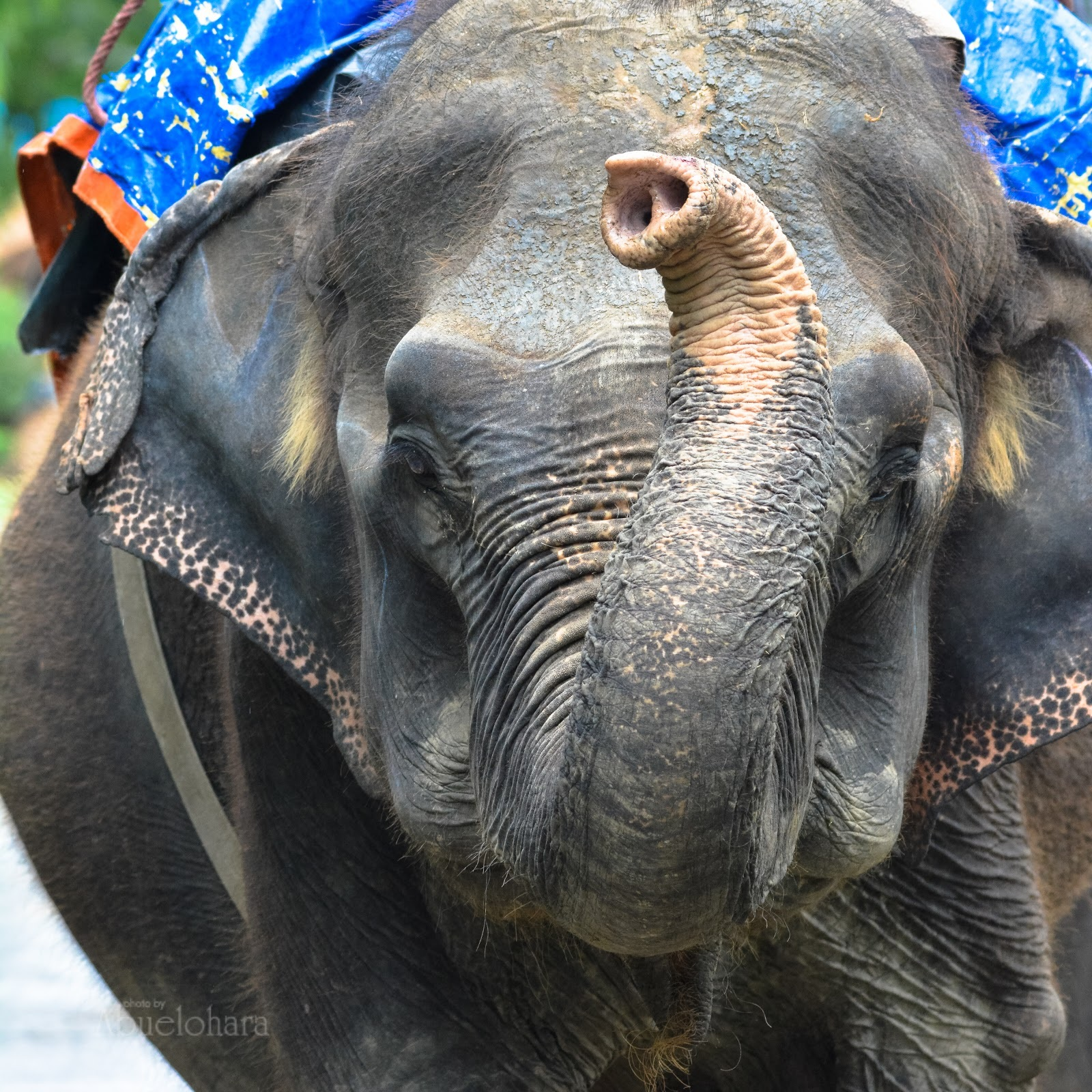 21 días en Nepal – Safari en CHITWAN