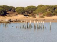 Coto de Doñana