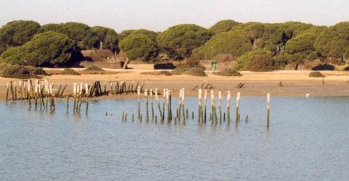 """SEO/Bird Life advierte de """"daños irreversibles"""" en Doñana"""